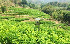 海南推行绿色无公害农业 强化农产品质量安全产销监管