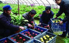 今年黑龙江省农民创业纯收入超过330亿元 创业参与人数达150万人