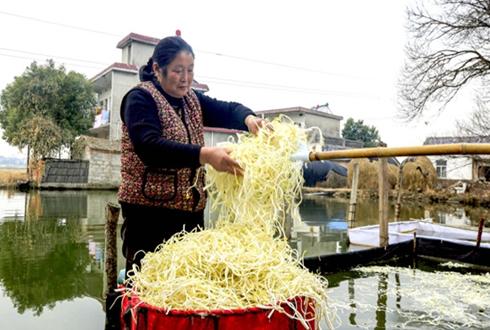 是芹菜还是豆芽?这种蔬菜让庐江农民成功致富