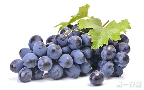 历史3年签署协议 埃及葡萄进入加拿大市场
