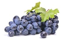 <b>历史3年签署协议 埃及葡萄进入加拿大市场</b>