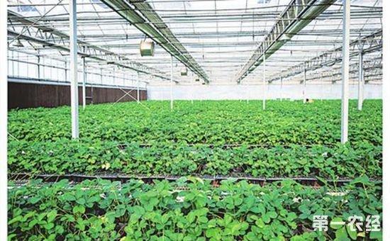 山西省推进农业科技园区建设 已建成3家国家农业科技园区