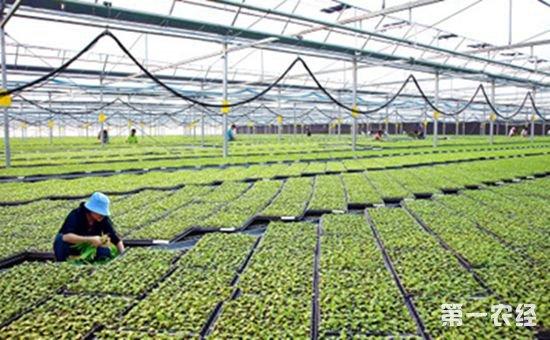 """江西省以绿色生态农业""""十大行动""""为抓手 扎实推进农业生态文明建设"""