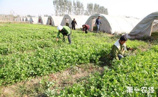 我国农民合作社事业蓬勃发展、兴旺昌盛