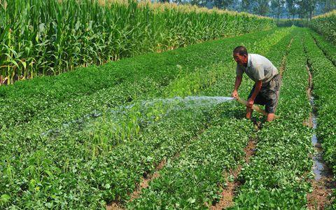 2018年粮食补贴改革:符合条件的人才能拿粮食补贴