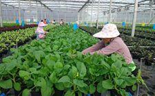 """<b>海南省着力推进绿色无公害农业发展 从源头上保障群众""""舌尖上的安全""""</b>"""