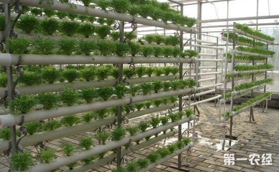 陕西促进全省农业绿色发展 绿色已经成为农业发展的主色调