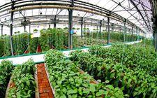 四川资中县:转变农业发展方式 积极探索循环农业发展新模式