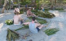 巴新椰子年经济贡献超1.26亿基纳