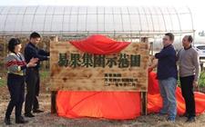 兴农+扶贫 易果集团在云南红河启动首个示范田项目