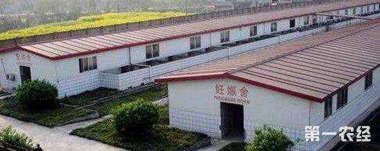 各类猪舍均采用人字屋顶有窗式设计及砖木水泥青瓦或钢架彩瓦