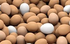 2017年12月28日全国各地区最新鸡蛋价格走势分析