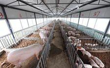 注意!下个月起农村养殖户就要依法交税啦!