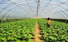 积极推进农药减量控害 大力推进绿色农业发展