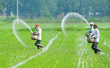 我国科学施肥工作取得了积极进展 提前3年实现化肥使用量零增长的目标