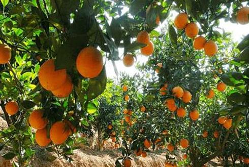 茶陵:特色产业助农实现脱贫致富