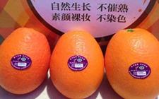我家在重庆奉节 是种植脐橙的果农