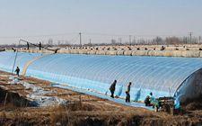 内蒙古东部地区7级大风来袭 设施农业要做好加固工作