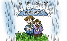 内蒙古凉城县多举措并举 积极推广种植业保险