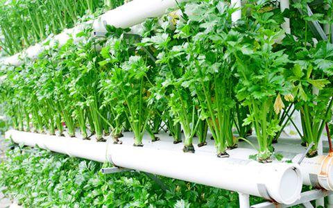 今年以来我国种植业供给体系质量效率显著提升