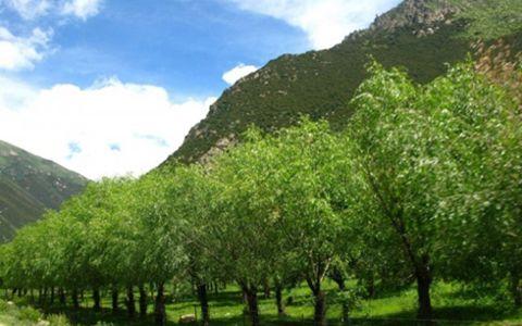 """绿水青山正成为西藏不少农牧民脱贫致富的""""法宝"""""""