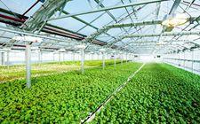 农业部召开农业科研院校开展农技推广座谈会
