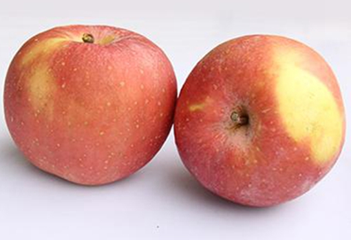 山西苹果长沙贩卖 大量滞销果农愁哭