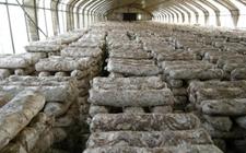西丰更刻:自产自销助力香菇产业引领致富路