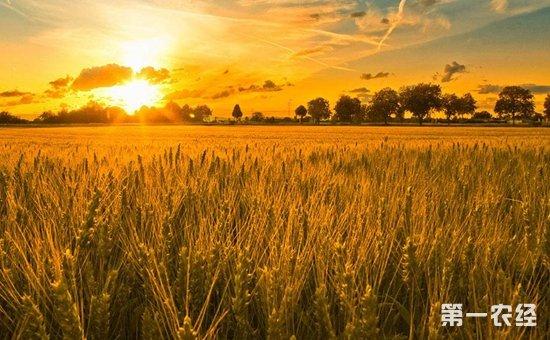 轮作休耕制度试点规模将扩大至2400万亩  推进农业供给侧结构性改革