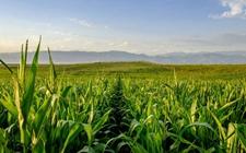 <b>紧紧围绕农业供给侧改革 种植业供给体系质量效率显著提升</b>