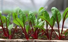 农业部:探索构建农业科技推广服务新模式 加快科技成果转移转化