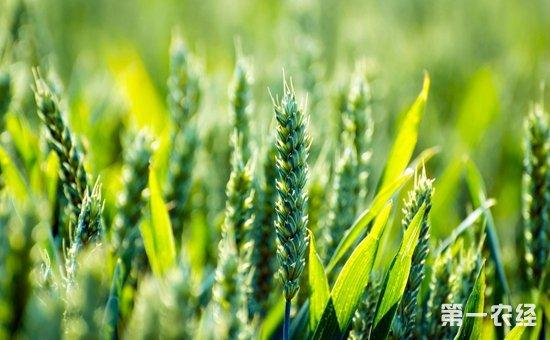 大力推进化肥减量提效和农药减量控害  持续推进农业投入品减量