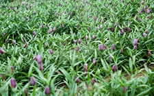 黑龙江林口:大力发展中药材特色种植产业 助农民增收致富