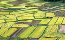 <b>农业部:坚定不移推进结构调整推动农业供需</b>