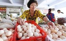 鸡蛋价格分歧点之路 蛋价去往何方?