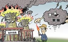 浙江宁波:秸秆综合利用率提高到92% 农田几无稻草焚烧现象