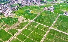 福建上杭县投资千万建高标准农田 9个贫困村获益