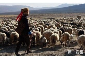 党中央出台系列优惠政策 西藏农牧民十四万人脱贫