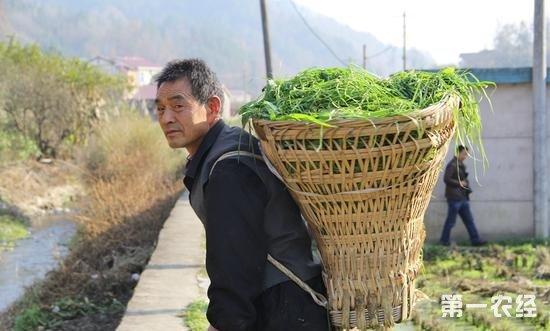 西安石泉:夫妇养蚕种藕年入15万 带领乡亲一同增收致富