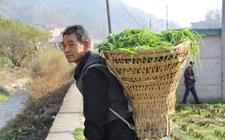 <b>西安石泉:夫妇养蚕种藕年入15万 带领乡亲一同增收致富</b>