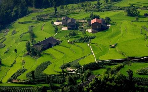 提升绿色优质农产品供给 走好质量兴农之路