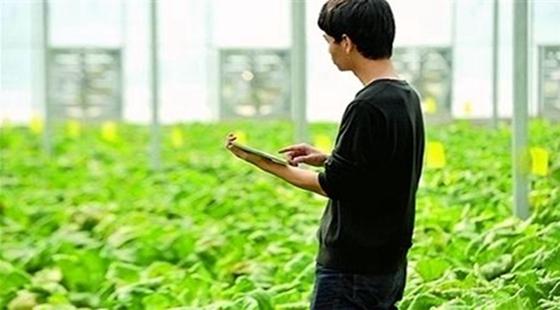 全面信息化推进农业农村现代化 市场化改革激发农业增效