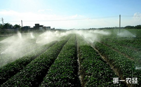 实施乡村振兴战略要走好质量兴农之路  由增产导向转向提质导向