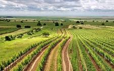 """山西:农业生产围绕""""十大任务"""" """"冬季行动""""发展快效果佳"""
