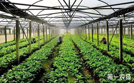广西来宾:狠抓现代特色农业(核心)示范区创建显成效