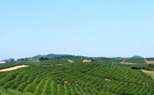 2017年省标准化名茶厂名单出炉 湖州市又有5家茶企上榜
