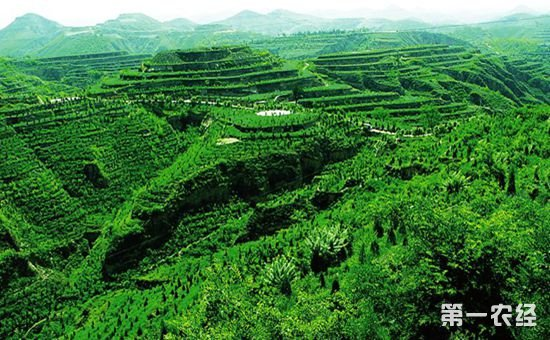 我国林业产业发展与不足并存 需加大科技成果供给