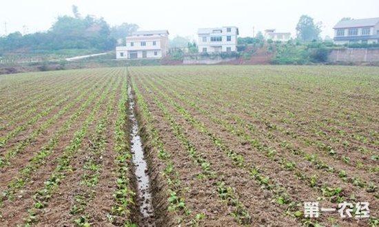 几种油菜田专用除草剂农药价格