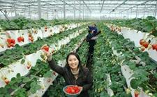 威海文登:发展近郊旅游项目 走现代农业发展之路