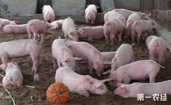 怎样有效诊断猪肺疫猪病?猪肺疫有哪些病理变化?